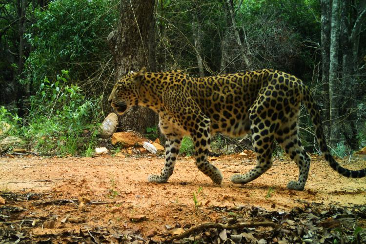 TTD releases pics of rare wildlife in APs Seshachalam but forest officials wary