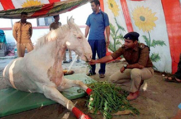 Person responsible for death of Shaktiman should be arrested says Maneka Gandhi