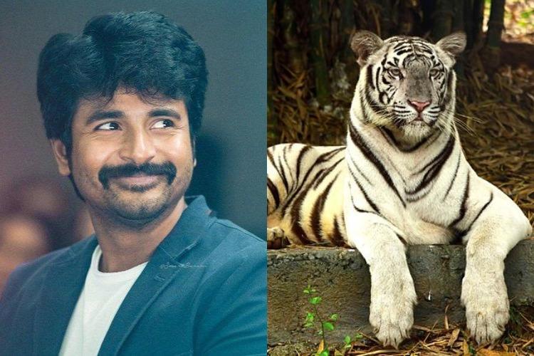 Actor Sivakarthikeyan adopts Chennai zoos white tigress