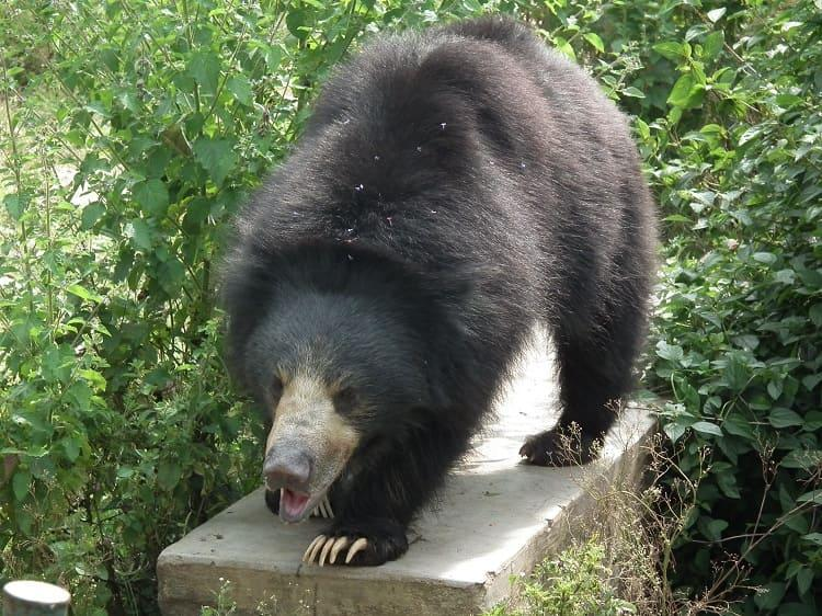Bear attack in Andhras Srikakulam Death toll rises to 3 as one more succumbs