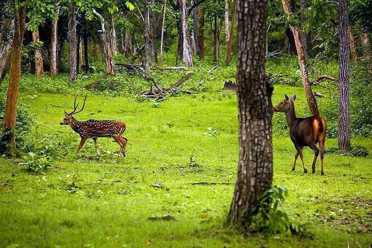 Will the Karnataka govts idea to have private forest land threaten wildlife