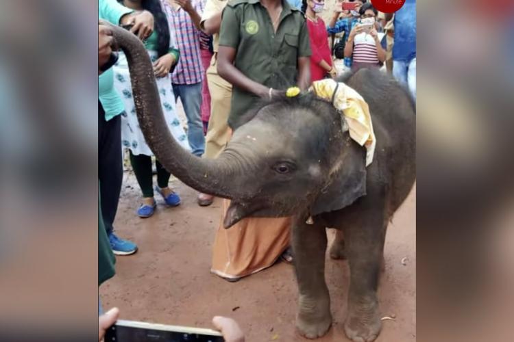 Kerala elephant calf Sreekutty whose birthday video went viral dies