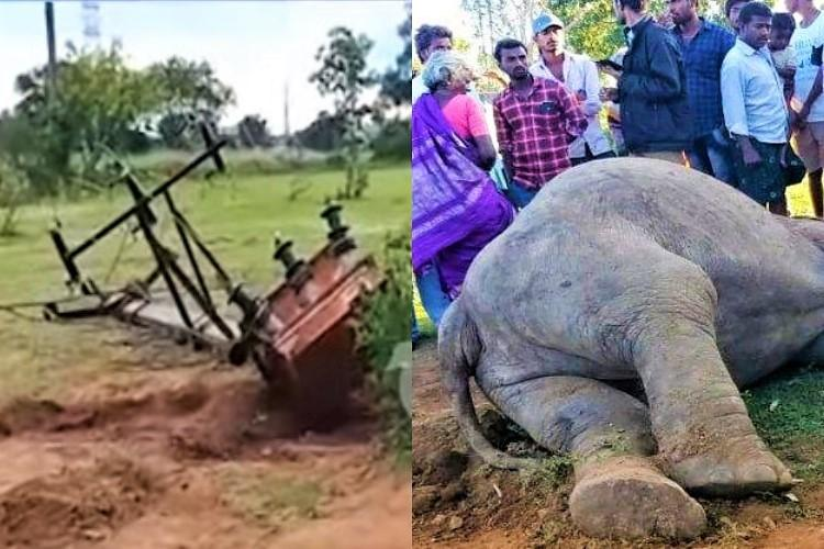 Mother elephant uproots transformer in Andhra day after her calf dies of electrocution