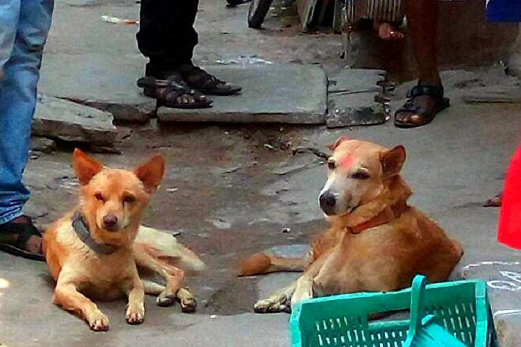 These two hero dogs helped nab a man who stabbed a woman in Chennai
