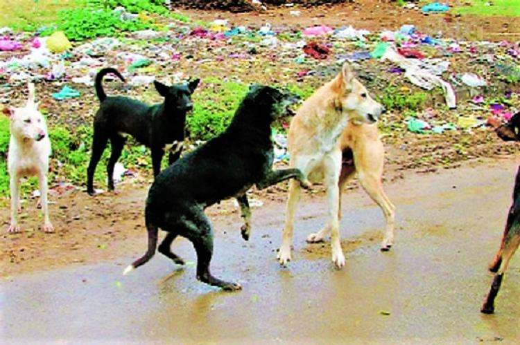 50 dogs injured after residents of Hyd gated colony go on rampage cane them
