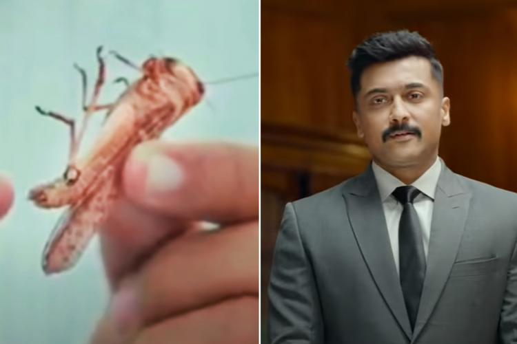 A collage of locust and Suriya from the film Kaappaan