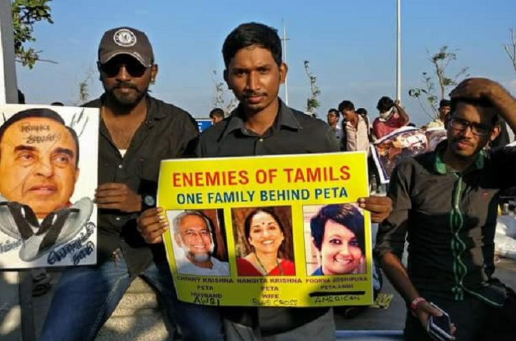 Jallikattu protest Subramanian Swamy faces massive ire for using term porukkis