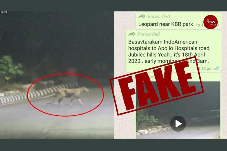 TNM Fact Check A leopard was not seen near Hyderabads KBR park