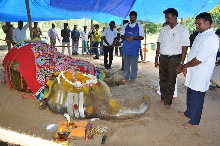 Ailing TN temple elephant dies a natural death days after Madras HC allowed euthanasia