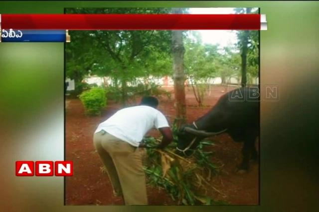 Telangana DSP makes Home Guards feed cattle wash dishes Inquiry ordered