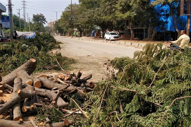 Trees chopped in Nallagandla in November 2019