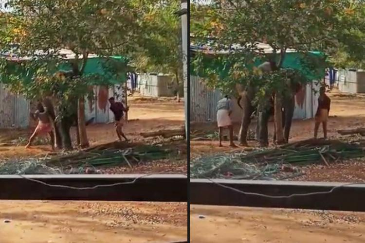 Two mahouts caning an elephant at the Thekkampatti elephant rejuvenation camp in Coimbatore