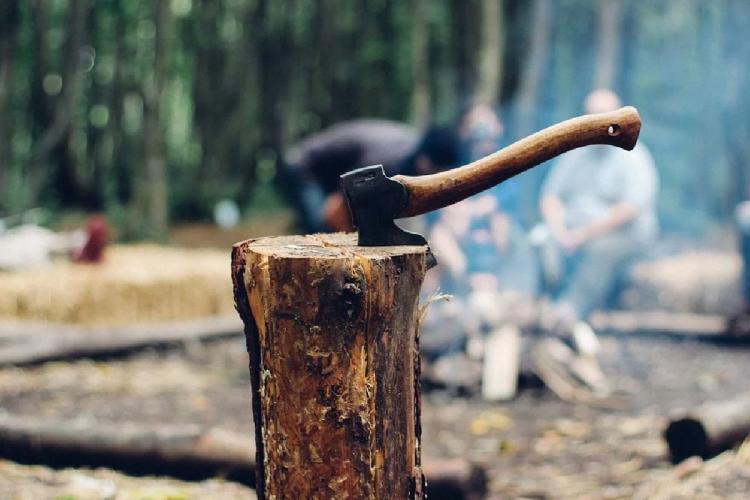 Representative image of timber felling