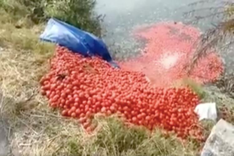 TN farmers dump tomato harvests into lakes after prices drop