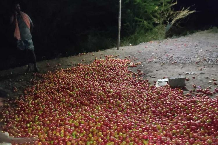 Tomatoes scattered on the road in protest of low prices in Kurnool