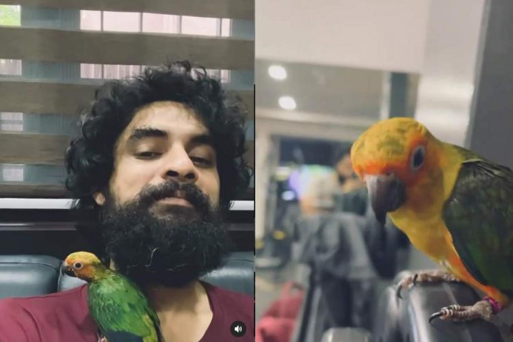 Tovino Thomas shares video with his pet bird Sun Conure Mathan