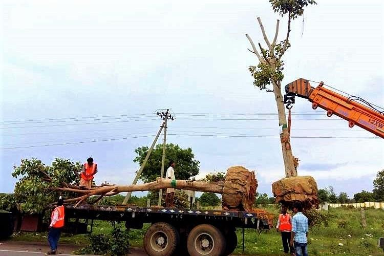 People power Hyd panchayat and residents to translocate 100 trees facing axe for flyover