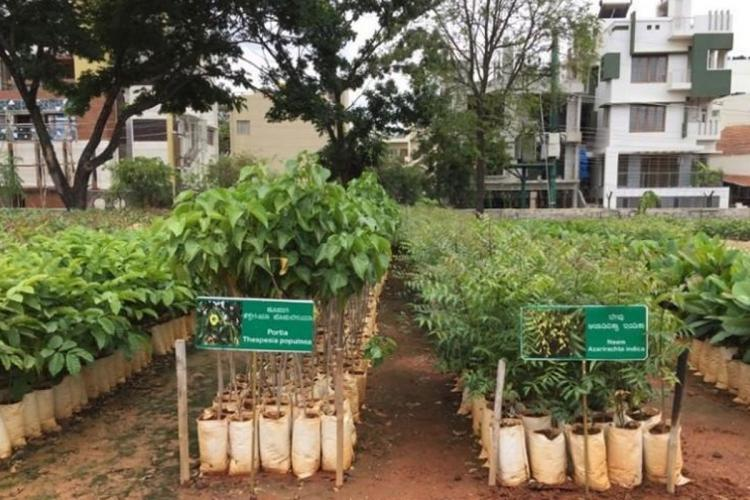 Line of saplings waiting to be planted