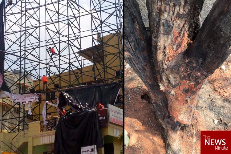 Congratulations Bengaluru Illegal hoarding for which trees were poisoned brought down