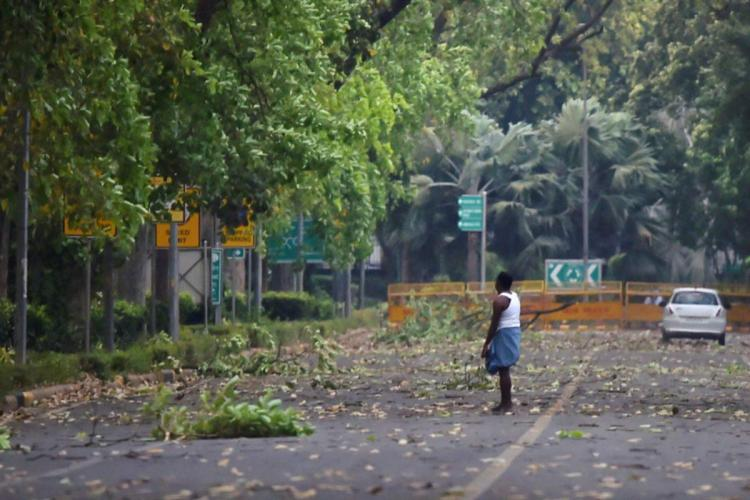 A man standing on a street in front of a barricade with leaves fallen on the ground