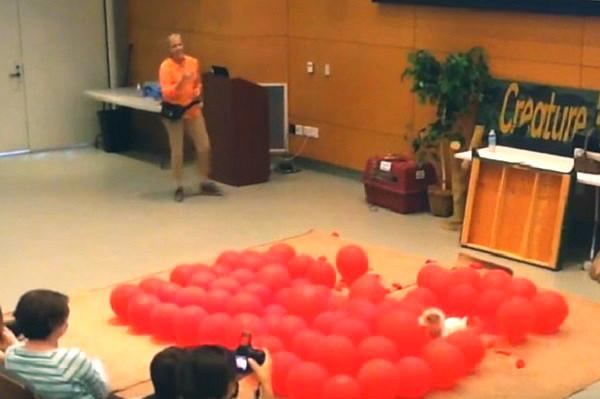 Watch Twinkie the dog pop balloons break a Guinness World Record and have a blast