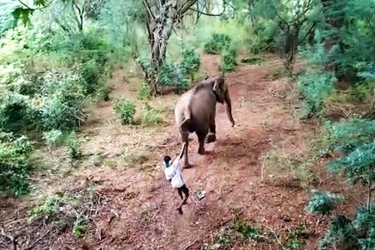 Youth attacking elephant caught on camera