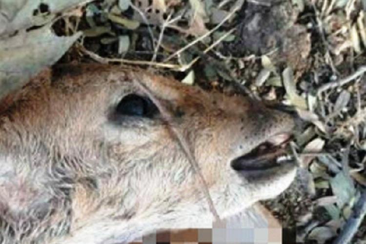 Severed deers head found in Hyd Uni campus third animal death in ten days