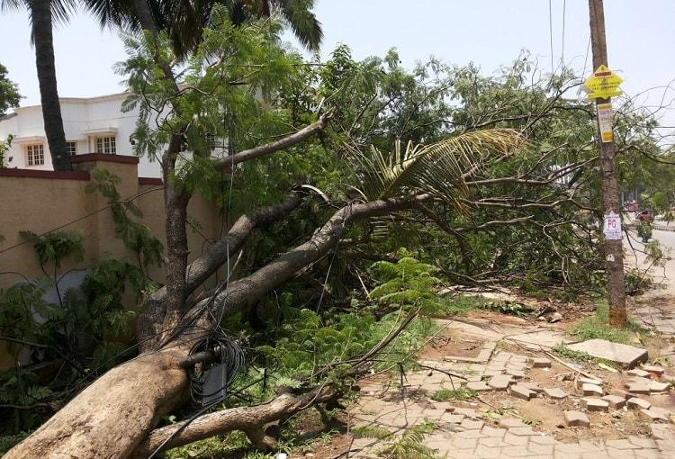 Bengaluru rain uproots 135 trees BBMP admits to not have completed tree audit