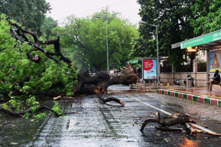 Heavy rain in Bengaluru causes havoc uproots 117 trees brings traffic to standstill