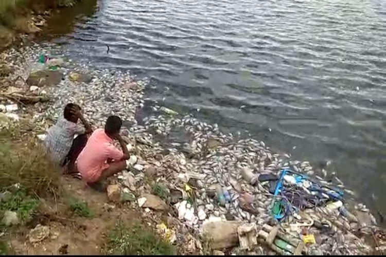 Constant dumping of waste killed hundreds of fish in Coimbatore tank