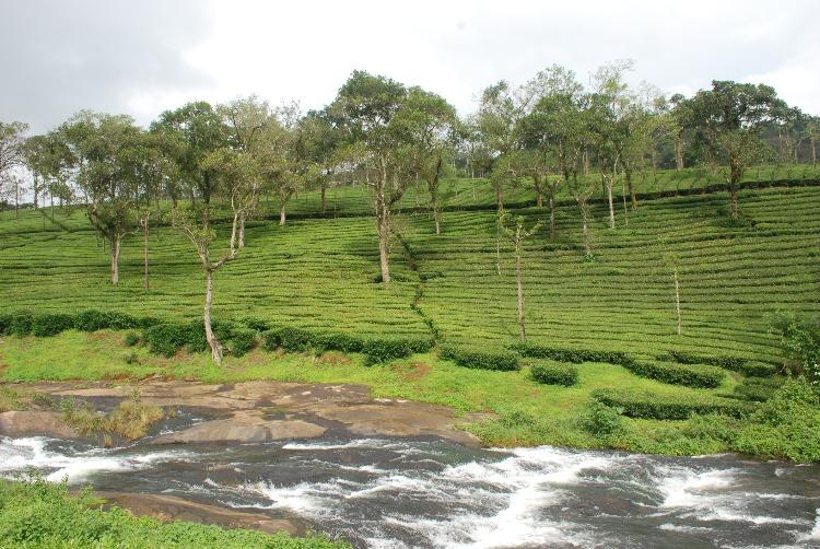 Photo feature In the tea country of charming Valparai