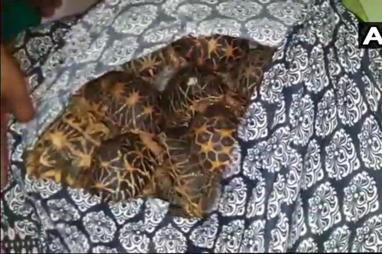 DRI arrests two for smuggling 406 Indian Star Tortoises at Vijayawada railway station