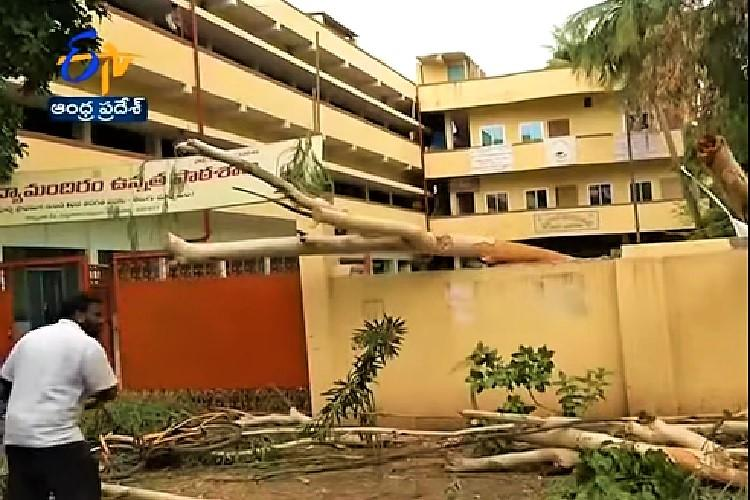 12-year-old dies in Vijayawada after tree falls on him parents donate eyes