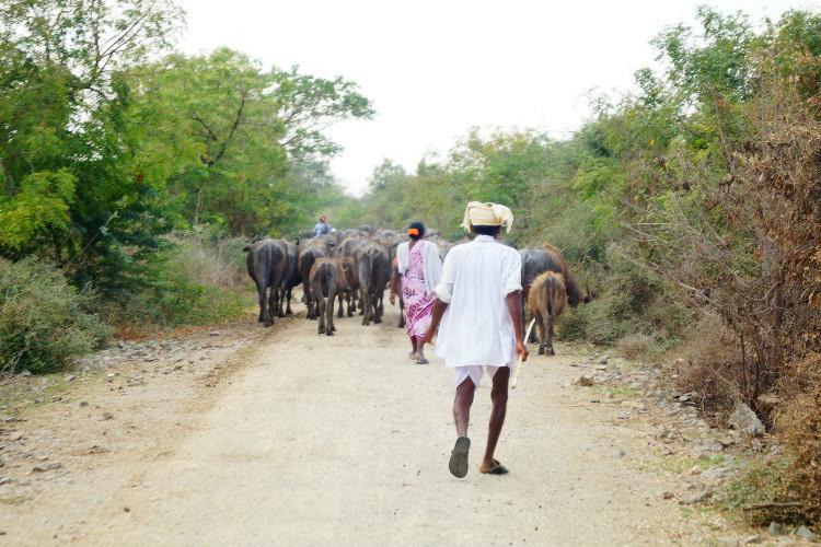 Telanganas Village Development Committees act like feudal landlords perpetuate caste
