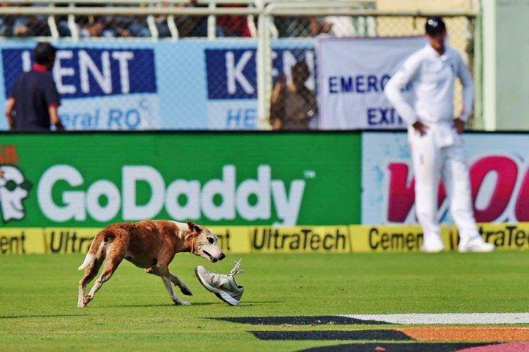 What happens when a stray dog interrupts a cricket match It gets its own Twitter account