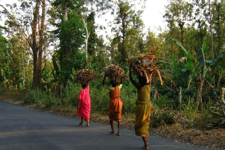 Animal attacks failing livelihoods force Kerala tribals to leave their forest hamlets