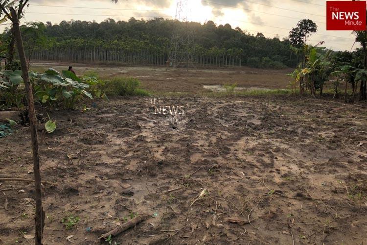 A season of devastating losses Wayanads tribal farmers will have a gloomy harvest