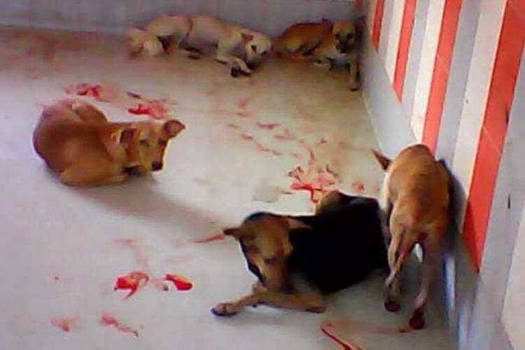 Animal trust alleges cruelty at govt-run birth control centre in Chennai vet denies allegations