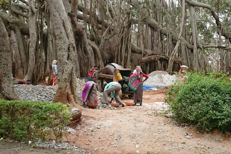 After protests concrete path around Bengalurus 400-year-old Big Banyan Tree removed