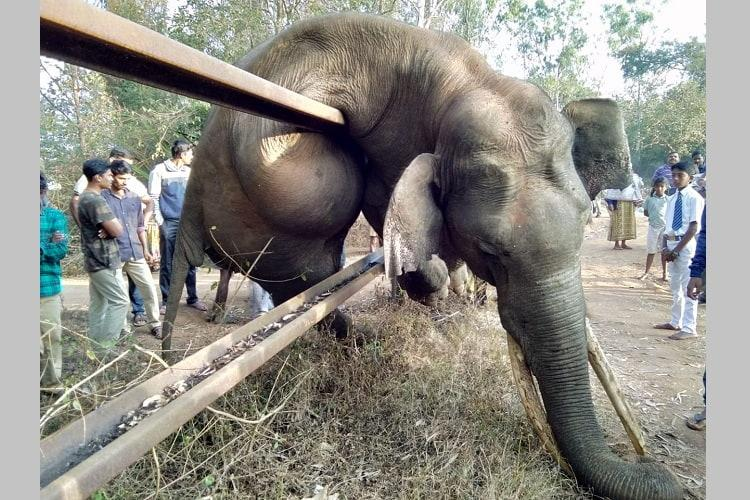 Elephant dies trying to cross fence in Nagarhole sparks outrage from activists