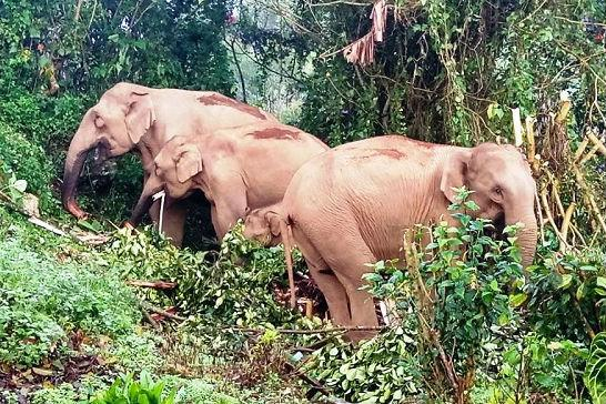 Restore elephant habitat near Anayirankal in Munnar NGO files complaint with officials