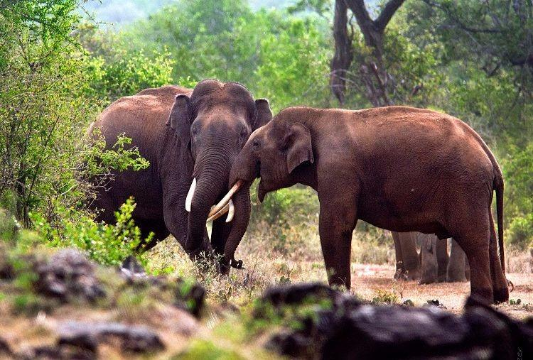 Kerala govt to bore water holes in forests use Kumki elephants to reduce man-animal conflict