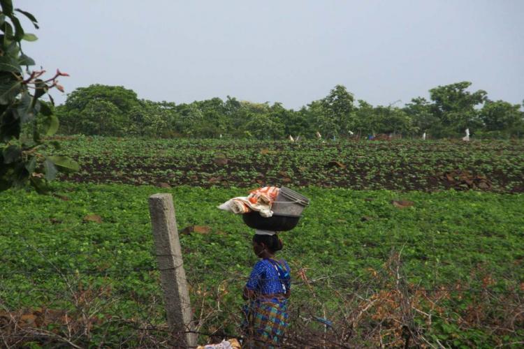 Woman farmer walking in a field