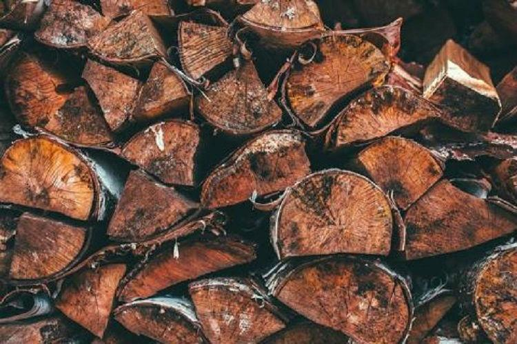 Hyderabad police seize around 50 red sanders logs from auto rickshaw at ORR