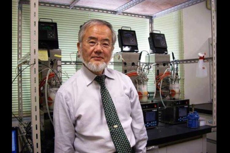 Yoshinori Ohsumi A deserving winner of the Nobel Prize for physiology or medicine