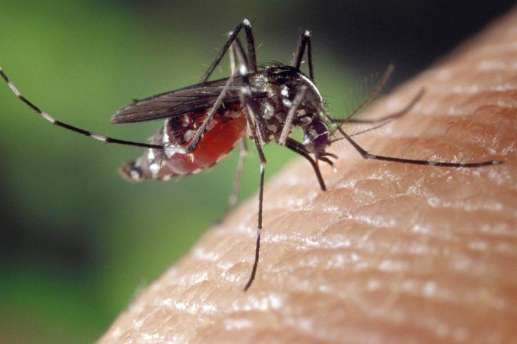 Zika virus confirmed in pregnant woman in Kerala, more cases suspected |  The News Minute