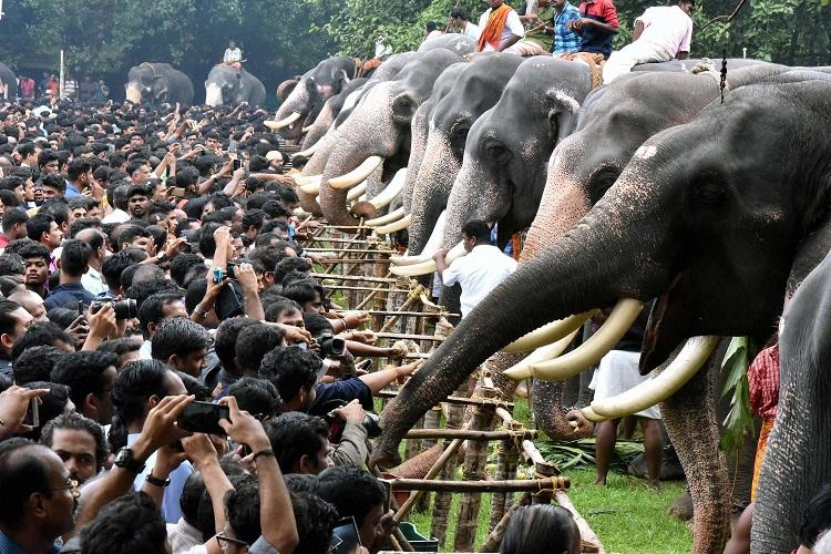 Thrissur elephant-feeding ceremony faces criticism over torture of jumbos