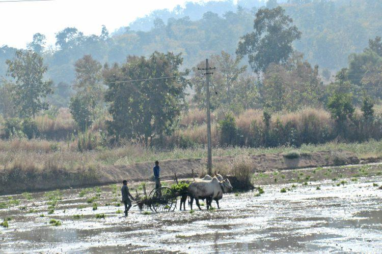 28 districts in Telangana record deficit rainfall cultivation decreases by half