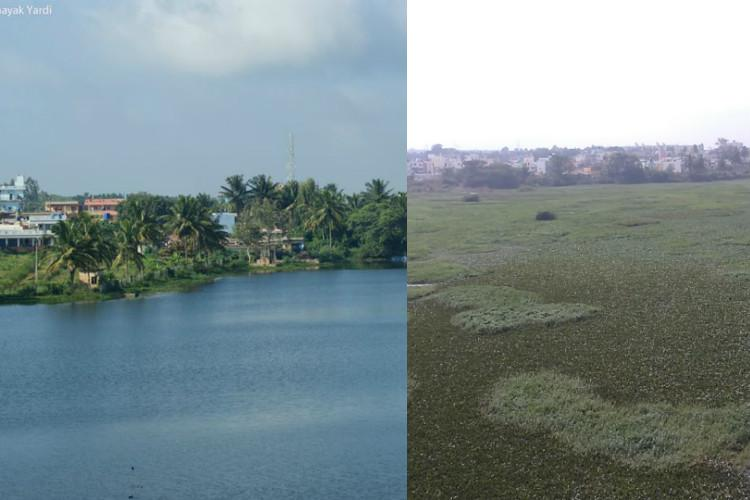 Tired of government apathy Bengaluru residents pitch in to clean Alahalli lake