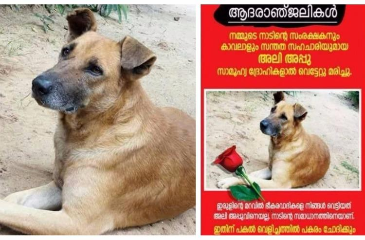 Death of a guardian Why an entire Kerala village is mourning the loss of one dog
